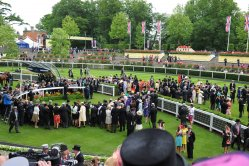 Royal Ascot. The Coventry Stakes and the Windsor Castle Stakes. Final Fields now known.