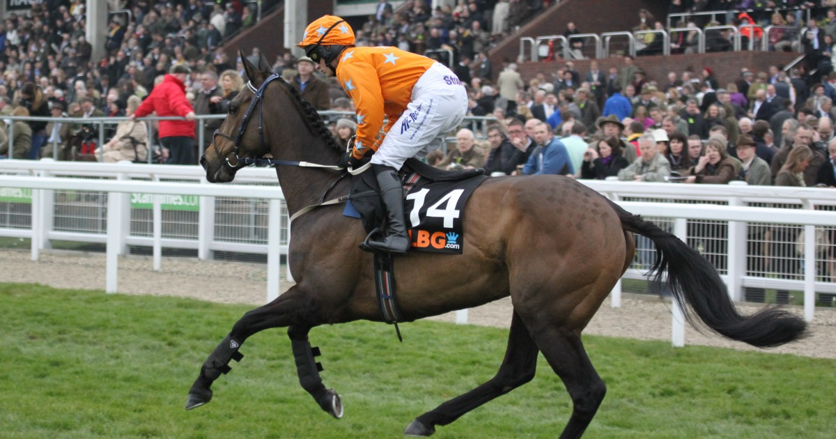 Olbg mares hurdle betting trends betting sports for a living